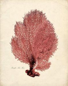 Vintage Sea Coral Illustration