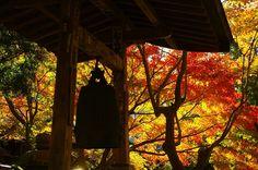 kamakura#鎌倉#覚園寺#紅葉#