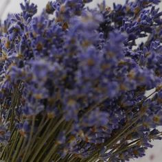 Ich liebe Lavendel :-) Plants, Card Wedding, Lavender, Invitations, Love, Plant, Planets