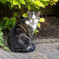 laikipia's photo Cats, Animals, Instagram, Gatos, Kitty Cats, Animaux, Animal, Cat, Animales