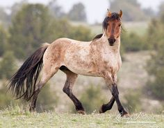 Roan in the Rain; what nice coloring i Want horses and a ranch some day!!