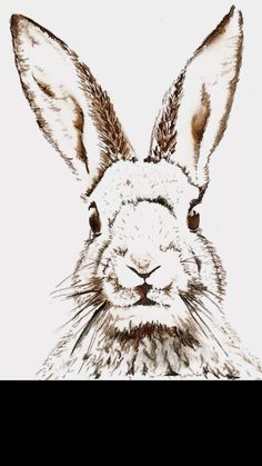 Picture Quotes Bunny Cute Hare Photo Bunnies Rabbit
