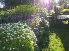 piha,kasvit,kukat,istutus,perennat