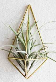 Geo Air Plant Sconce