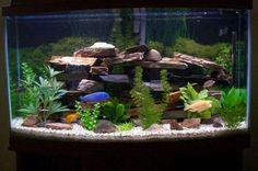 African cichlid tank. This is kinda like mine...minus the plants.