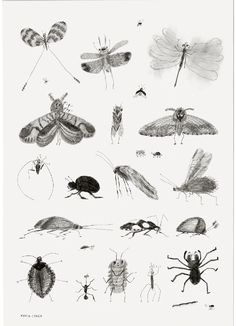 Bug Poster - ROOM - Products : Fawn Shoppe - Global Boutique For Unique Children's Designs