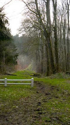 Forêt de Verdun #champagneardenne #meuse #verdun