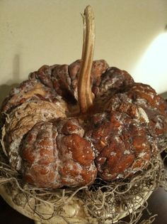 science experiment — last year's pumpkin gourd