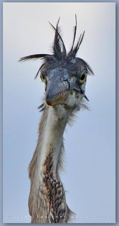 I'm not sure if this pathetic looking bird is ok or not.  At any rate, it reminds me of me first thing in the morning :)