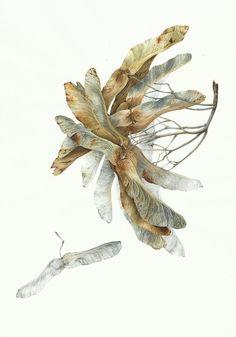 Botanical art for interior Graphics for interior Nature art for interior Watercolor Print, Watercolor Flowers, Watercolor Paintings, Botanical Flowers, Botanical Prints, Nature Drawing, Botanical Drawings, Plant Illustration, Whimsical Art