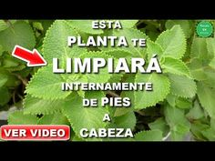 YouTube Tips Belleza, Videos, Youtube, Herbs, Mary, Medicinal Plants, Health And Beauty, Natural Remedies, Spirituality