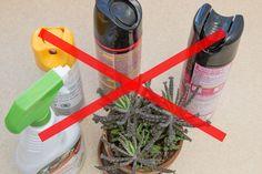 How to Make Homemade Bird Repellent Spray Bug Spray For House, Pest Spray, Mosquito Spray, Homemade Bug Spray, Plant Bugs, Insecticide, Hibiscus Plant, Pothos Plant, Inside Plants