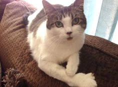 Our cat Mia. Cathy and Kevin, Columbia, PA - 6/20/2015
