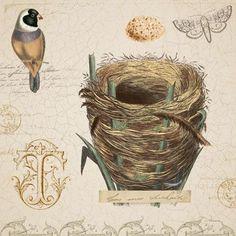 bird and nest FdV