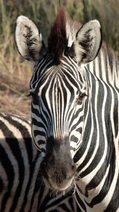 Mountain Zebra. Cooper Riach's adventures in Namibia - the last in a series of four.  http://luhambo.wordpress.com/2013/10/21/the-epic-adventure-part-4/
