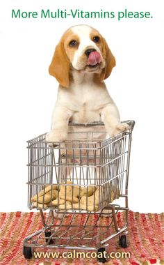 If you want good health of your dog than you need perfect diet according to their age, weight and activeness. we have healthy and raw food for all types of puppies. Give food in stainless steel bowl it is good for their health. Large Animals, Cute Animals, Types Of Puppies, Raw Pet Food, Dog Food Online, Dog Shop, Beagle Puppy, Funny Animal Memes, Pet Adoption