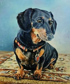 Dachshund Drawing, Arte Dachshund, Black Dachshund, Dachshund Love, Dog Stories, Dog Paintings, Dog Portraits, Pictures To Draw, Beautiful Dogs