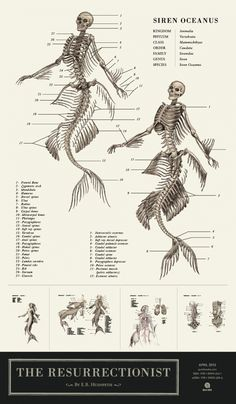 """Ocean Siren (Mermaid), from EB Hudspeth's The Resurrectionist, a two-part volume that includes The Codex Extinct Animalia, """"a Gray's Anatomy for mythological beasts"""""""