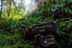 My ultimate guide to Olympic National Park! I outlined my trip with all my favorite stops along the way, going counter-clockwise around the park. Cascade National Park, National Parks, Washington State, Olympics, Travel Guide, Trail, Hiking, Inspired, Outdoor Decor