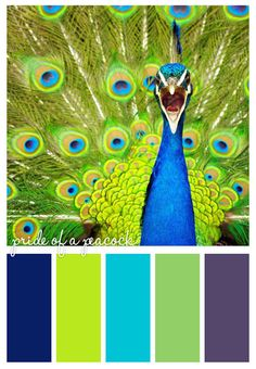 #peacock #color #scheme Create a photoshop file with photo and color swatches by sample photo colors. lesson idea.