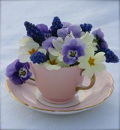 teacup floral arrangement primroses, grape hyacinths and pansies Fresh Flowers, Spring Flowers, Beautiful Flowers, White Flowers, Ikebana, Primroses, Arte Floral, Pansies, Daffodils