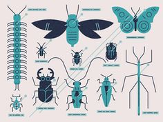 Insects, flat inspired, by MUTI (http://dribbble.com/StudioMUTI)