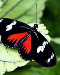 vlinders - Google zoeken