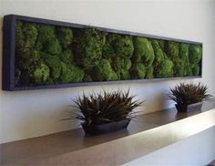 "18"" x 40"" Preserved mood moss wall art."