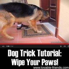 Teach your pet some useful dog tricks, like how to wipe their paws on the doormat! Especially useful after slushy winter walks...