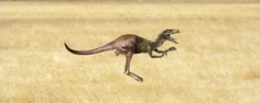 Kangaraptor