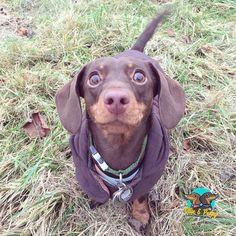 Hello fur-iends!  #ollieandpenny #dogs #woof