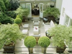 Box Topiaries Mix with Japanese Maples