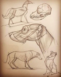 Another page of animal anatomy studies.  From Michael D. Matessi's book Force Animal Drawing and Animal Anatomy for artists.…