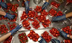 June Strawberries are prepared during the second day of the Wimbledon Lawn Tennis Championship in London on June Wimbledon Strawberries And Cream, Wimbledon Tennis, Wimbledon 2013, Raspberry, Strawberry, Lawn Tennis, Tennis Championships, Delicious Fruit, The Championship