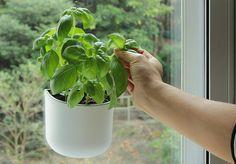 Okidome - hält am Fenster, an Fliesen ... ideal für die moderne kleine Küche