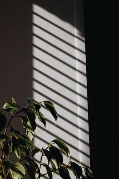 Leaves Wallpaper Iphone, Plant Wallpaper, Sunset Wallpaper, Scenery Wallpaper, Dark Wallpaper, Wallpaper Iphone Cute, Wallpaper Backgrounds, Iphone Wallpaper Tumblr Aesthetic, Aesthetic Pastel Wallpaper