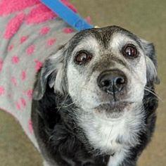 Pictures of Zora a Labrador Retriever for adoption in Livonia, MI who needs a loving home.