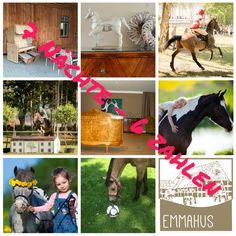 #pferdefutter, #mineralfutter, #pferdezubehör, #pferdepflege im www.emma-pferdefu...