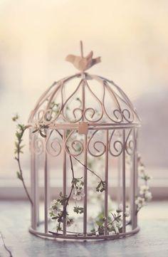 Spring bird cage...
