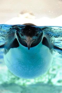 Why hello mr. penguin! Don't you look dapper :)