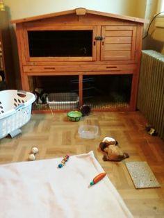Do attractive, spacious indoor rabbit cages exist? - BinkyBunny.com - House Rabbit Information Forum - BinkyBunny.com - BINKYBUNNY FORUMS - ...