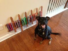 Dog collar storage/display. Picket fence from gardening section at Lowe's for only $6! Please see all the wonderful dogs available for adoption at DeKalb County Animal Services in Decatur, GA -- https://www.facebook.com/pages/Dekalb-County-Animal-Services/136093518770