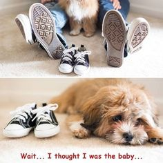 """""""My+husband+and+I+are+shoe+lovers+so+when+we+found+out+we+were+pregnant,+we+knew+we+had+to+start+our+babies+shoe+collection!+We+also+incorporated+our+puppy+who+really+does+think+he+is+the+baby...his+expression+was+priceless!""""+--+Rose,+Fairfax,+VA"""