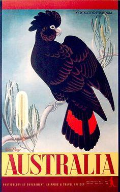 """Australia"" (c. 1953) travel poster with black cockatoo & banksia by Eileen Mayo via Josef Lebovic Gallery."