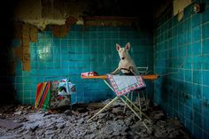 Best Art Ever: Dog Photography by Alice van Kempen #photo #dog #dogs #bullterrier