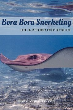 Swim with a ray on a Bora Bora snorkeling excursion. You'll see sharks too. Whether you're on a cruise in French Polynesia or staying in a Bora Bora over-the-water bungalow don't miss this travel adventure. Cruise Excursions, Cruise Destinations, Shore Excursions, Cruise Travel, Cruise Vacation, Dream Vacations, Cruise Tips, Asia Travel, Cruise Outfits