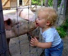 Cause of swine flu https://fitnesschap.com/treatment-and-symptoms-of-swine-flu-in-urdu/