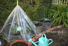 These DIY mini greenhouses are a great alternative for people who wish to grow their own vegetables and herbs but do not have enough room for a large greenhouse. Diy Mini Greenhouse, Greenhouse Frame, Diy Greenhouse Plans, Homemade Greenhouse, Greenhouse Supplies, Outdoor Greenhouse, Greenhouse Effect, Build A Greenhouse, Greenhouse Wedding