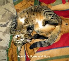 Photos with a #WW #Linky ~ Amanda's Books and More - our cat is the cutest!