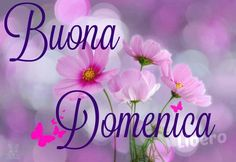 Buona Domenica #domenica Italian Memes, Italian Quotes, Good Morning Good Night, Christmas Images, Happy Day, Birthday Cards, Lily, Facebook, Google